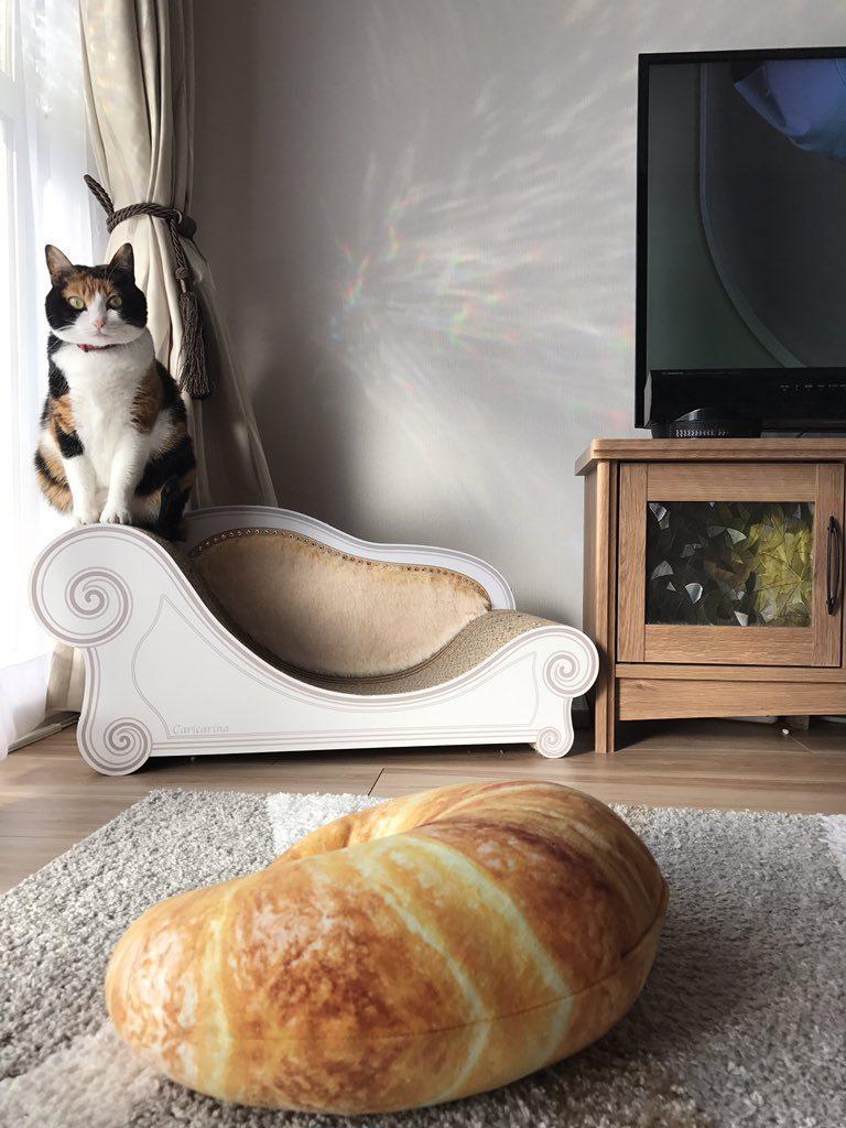 ニトリクロワッサン 猫