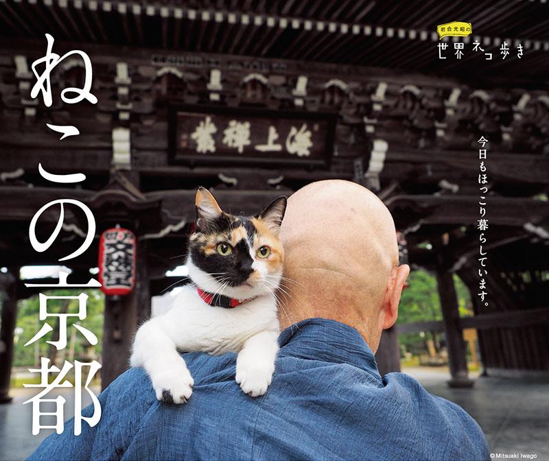 猫 名古屋
