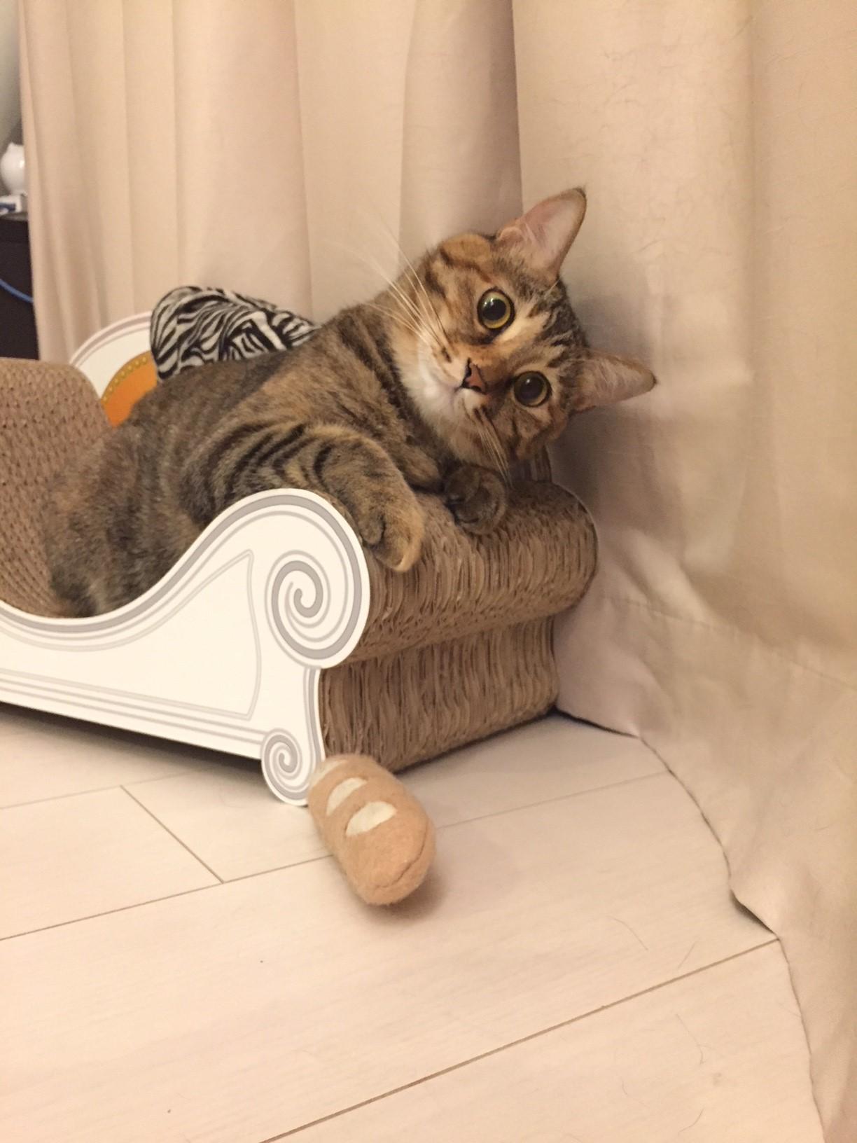 猫 つめとぎ おしゃれ