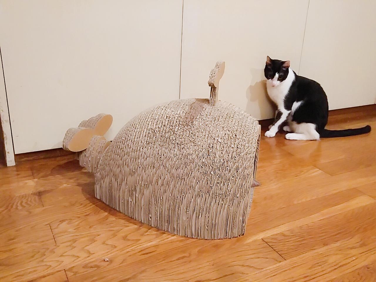 猫 くじら