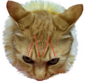 emuji