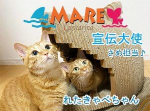 さめ宣伝大使れたきゃべちゃん640