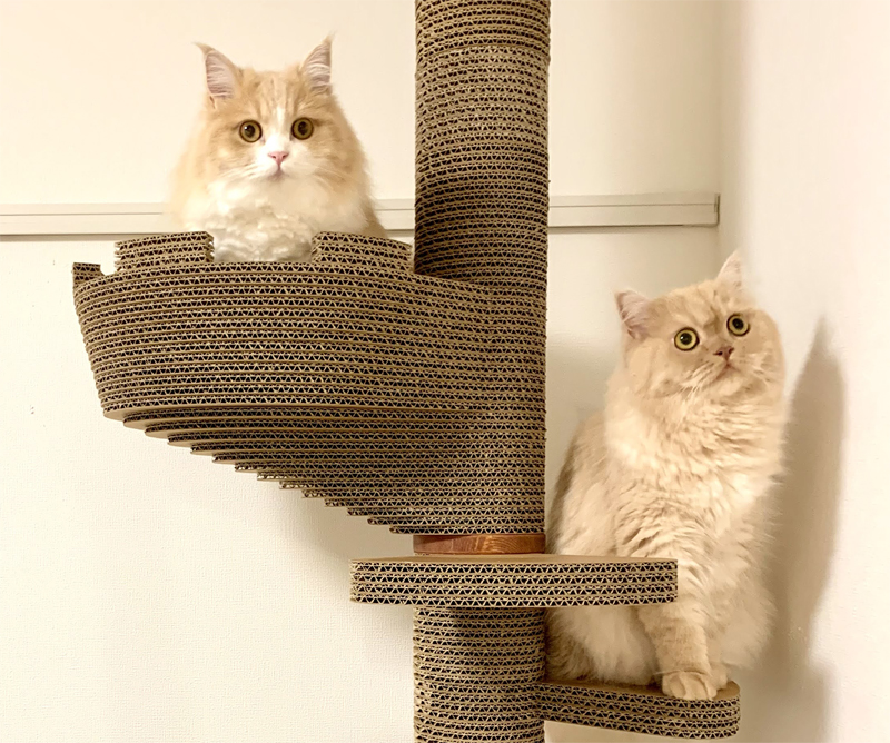 201027_cattower